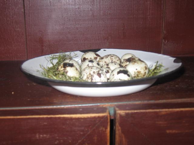 Quail Eggs - Cream and Brown