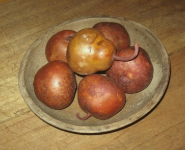 Amber Pear Gourds